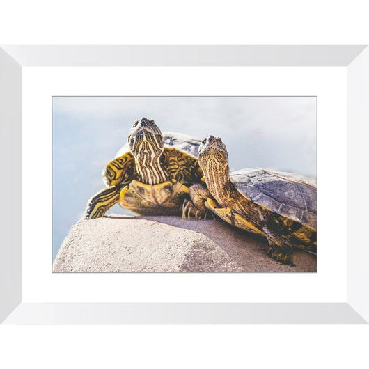 Turtle Couple | Framed Print