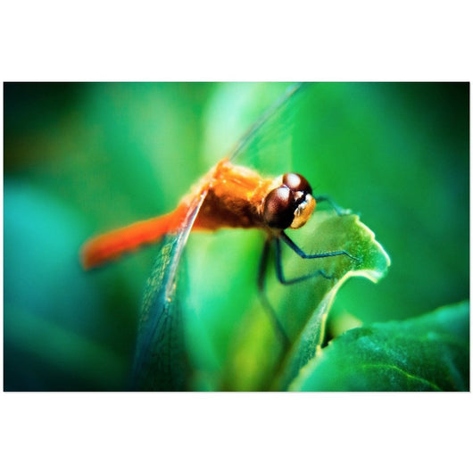 The Dragonfly | Acrylic Print