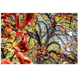 Autumn Dance | Canvas Wrap