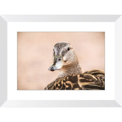 Friendly Duck | Framed Print