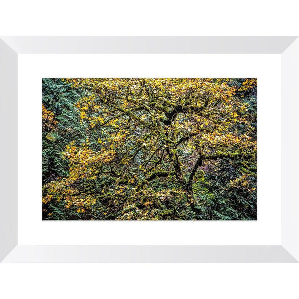 Autumn Glory | Framed Print