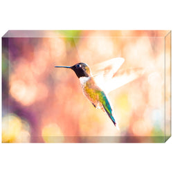 Hummingbird in Flight | Acrylic Block