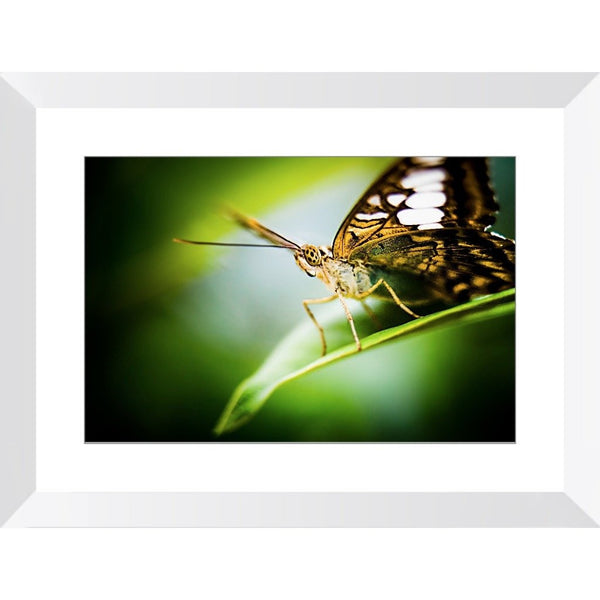 Butterfly Gaze | Framed Print