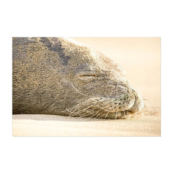 Sleeping Seal | Canvas Wrap