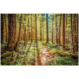 Enchanted Forest | Acrylic Print
