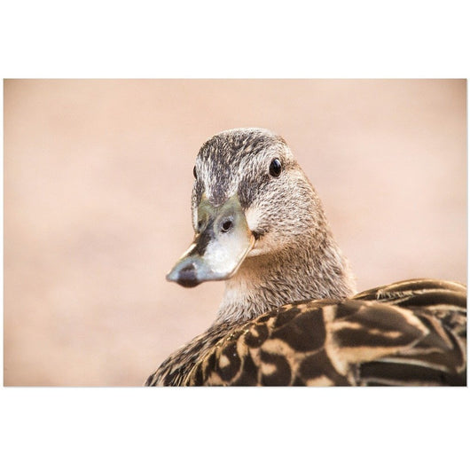 Friendly Duck | Acrylic Print