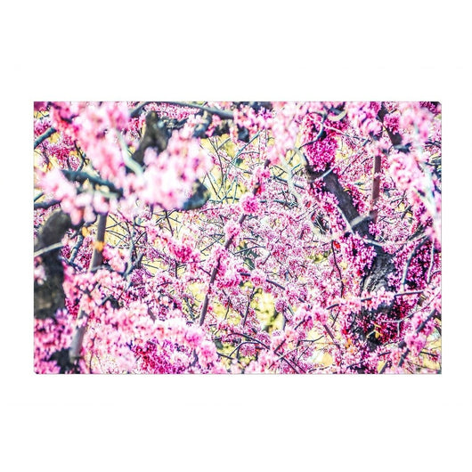 Spring Blossoms | Canvas Wrap