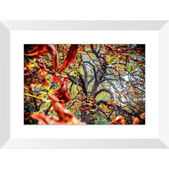 Autumn Dance | Framed Print