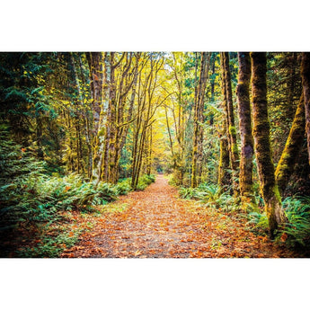 Path To Bainbridge | Metallic Print