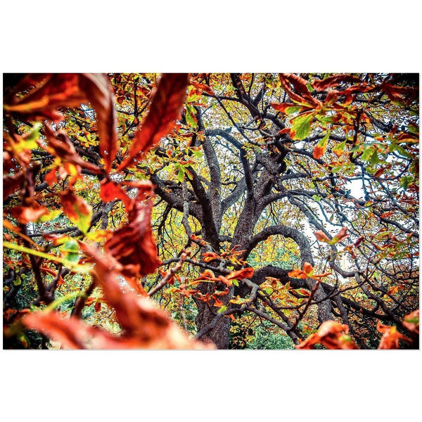 Autumn Dance | Acrylic Print