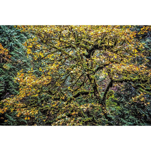 Autumn Glory | Metallic Print