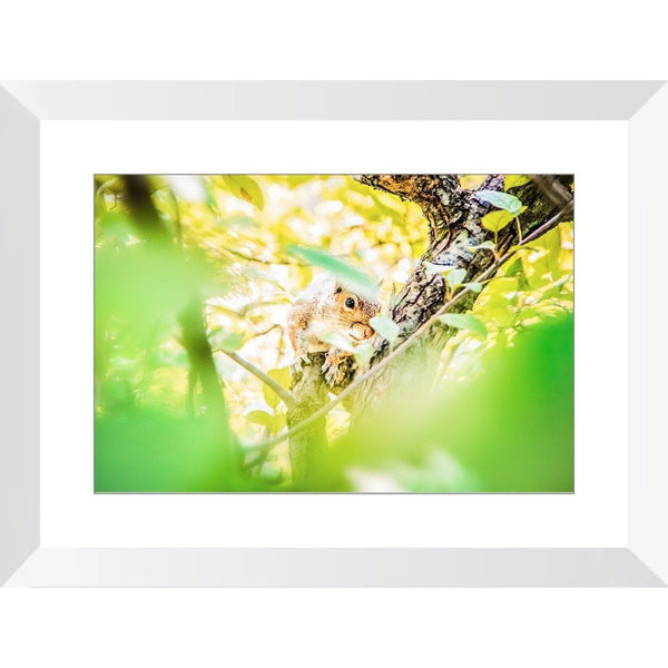 Baby Squirrel | Framed Print