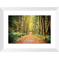 Path To Bainbridge | Framed Print