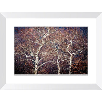 Entangled | Framed Print