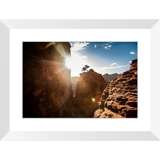 The Tree On Bell Rock | Framed Print