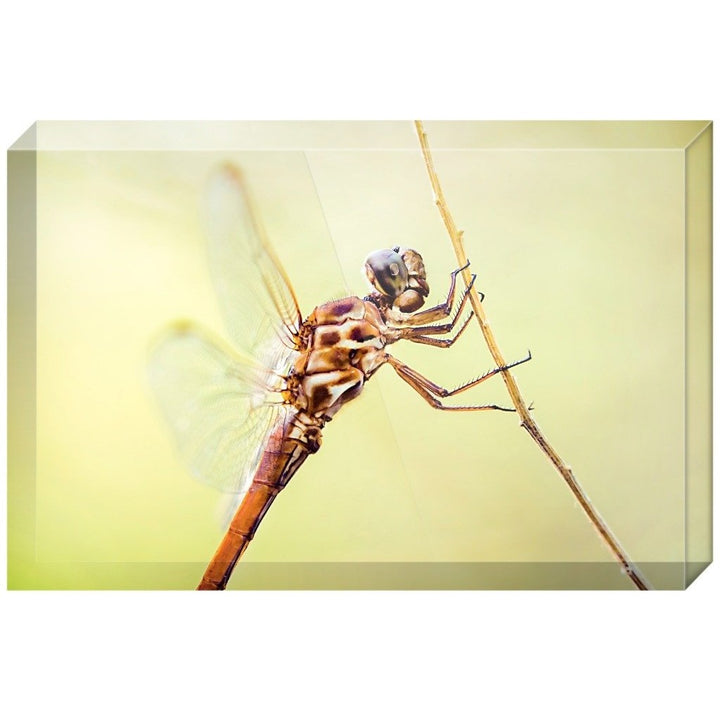 Metallic Dragonfly | Acrylic Block