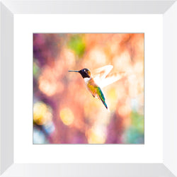 Hummingbird in Flight | Framed Print