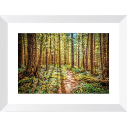 Enchanted Forest | Framed Print