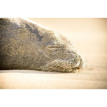 Sleeping Seal | Metallic Print