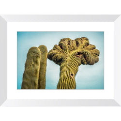 Cactus Labyrinth | Framed Print