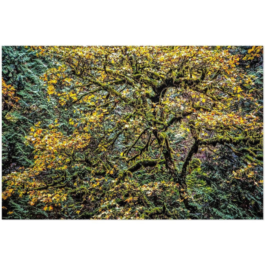 Autumn Glory | Acrylic Print