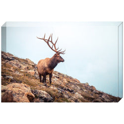Wise Elk | Acrylic Block