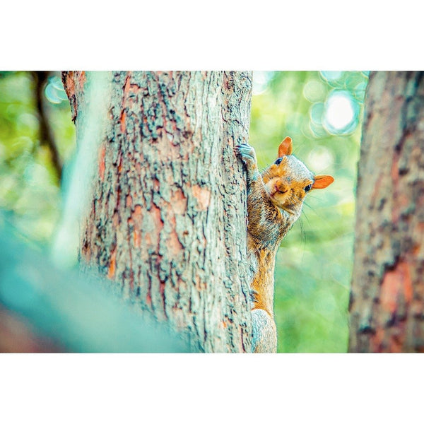 Squirrelly | Metallic Print
