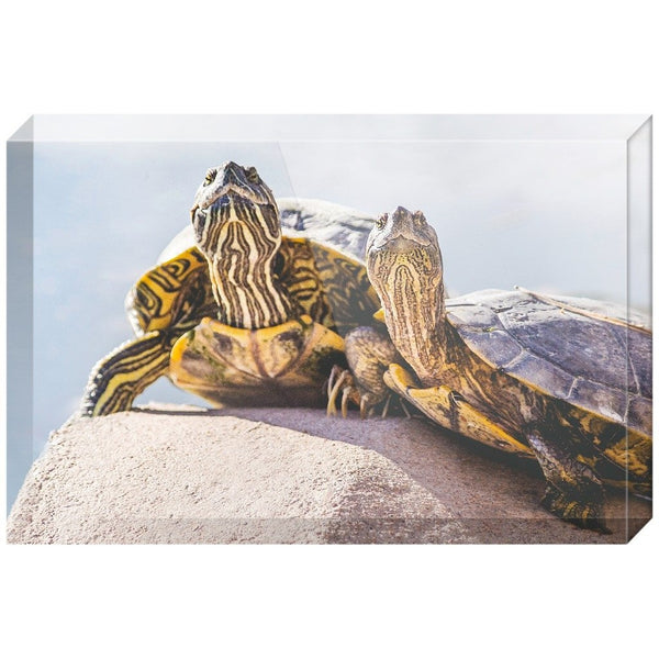 Turtle Couple | Acrylic Block