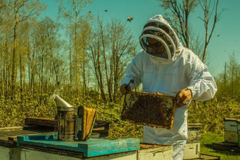 Daily Hive: Vancouver-area honey crowned best in world at international competition