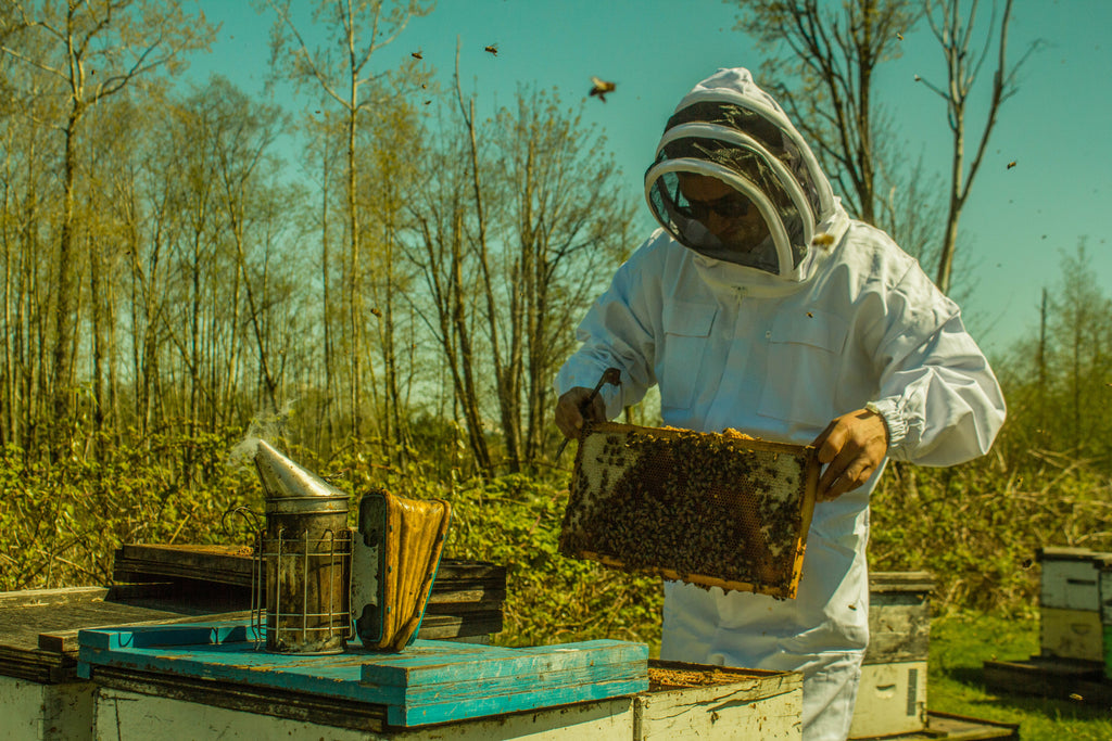 BCB Honey Farm | Canada's #1 Raw Honey | Raw, Local, Unpasteurized | Our Hives, Our B.C. Bees | 4121 King George Blvd., Surrey BC | Proudly Serving Vancouver, Lower Mainland, & Fraser Valley