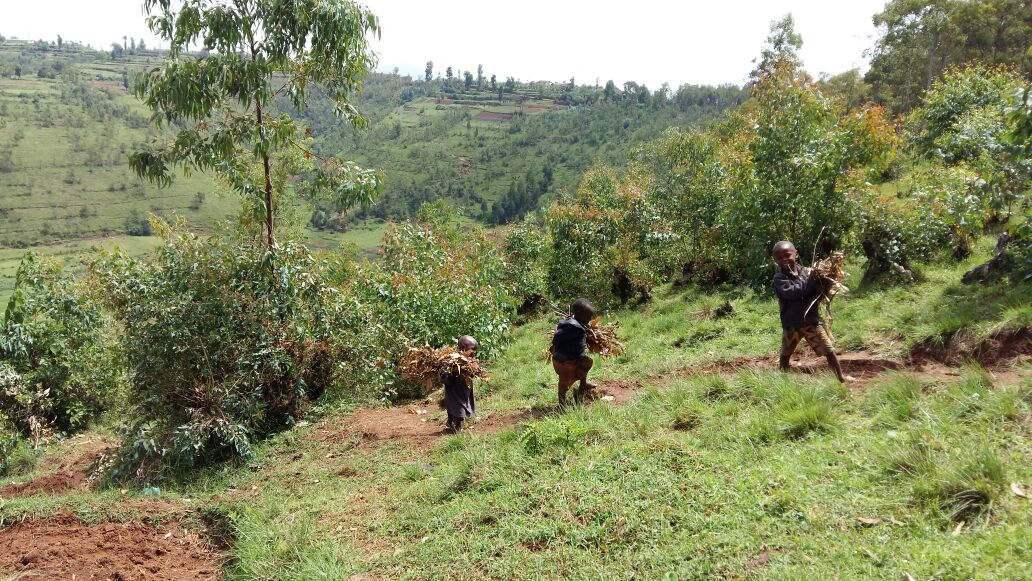 Rwandan Kids working in the fields and waiving walking up the hill