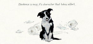 Border Collie Puppy Dog (Obedience is easy, it's character that takes effort!) Greeting / Birthday Card