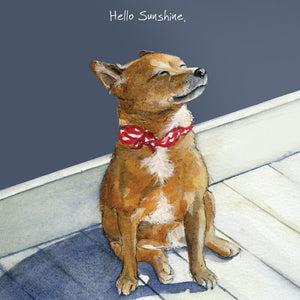 Jack Russell Cross Dog (Hello Sunshine) Greeting / Birthday Card