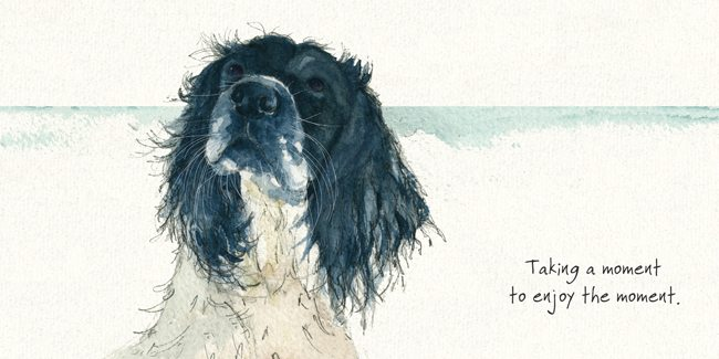 Spaniel Dog (Taking A Moment) Greeting / Birthday Card