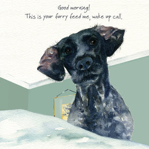 German Pointer Dog (Good morning! This is your furry feed me, wake up call.) Greeting / Birthday Card