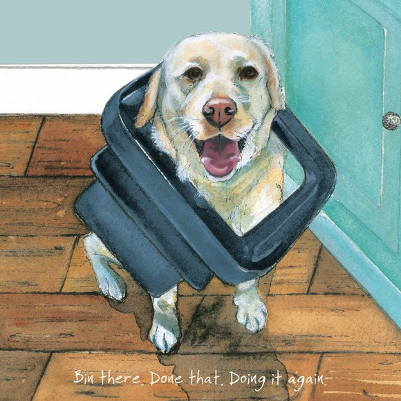 Labrador Dog (Bin there. Done that. Doing it again) Greeting / Birthday Card