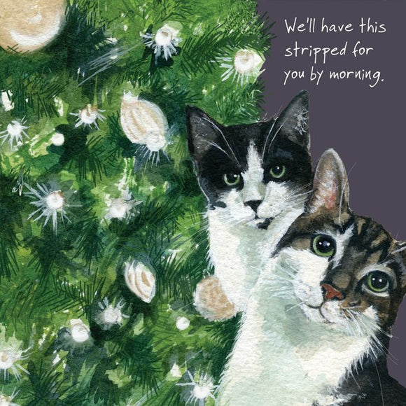 Moggie Cats (We'll have this stripped for you by morning.) Christmas Card