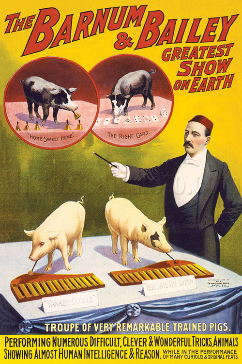 Barnum & Bailey: Trained Pigs