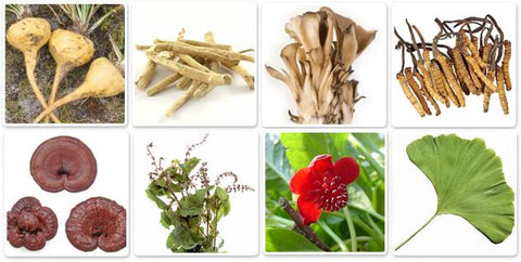 Common Adaptogens