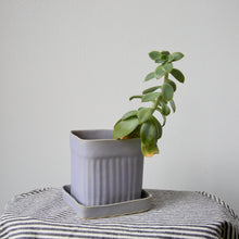 Small Square Judy Jackson Planter