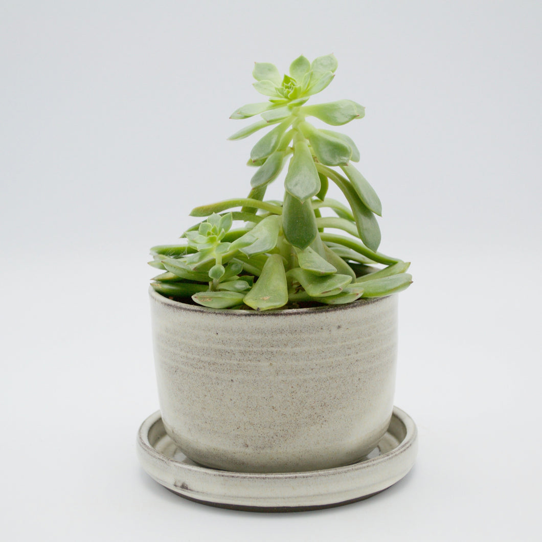 ANK Ceramics - Grey Planter