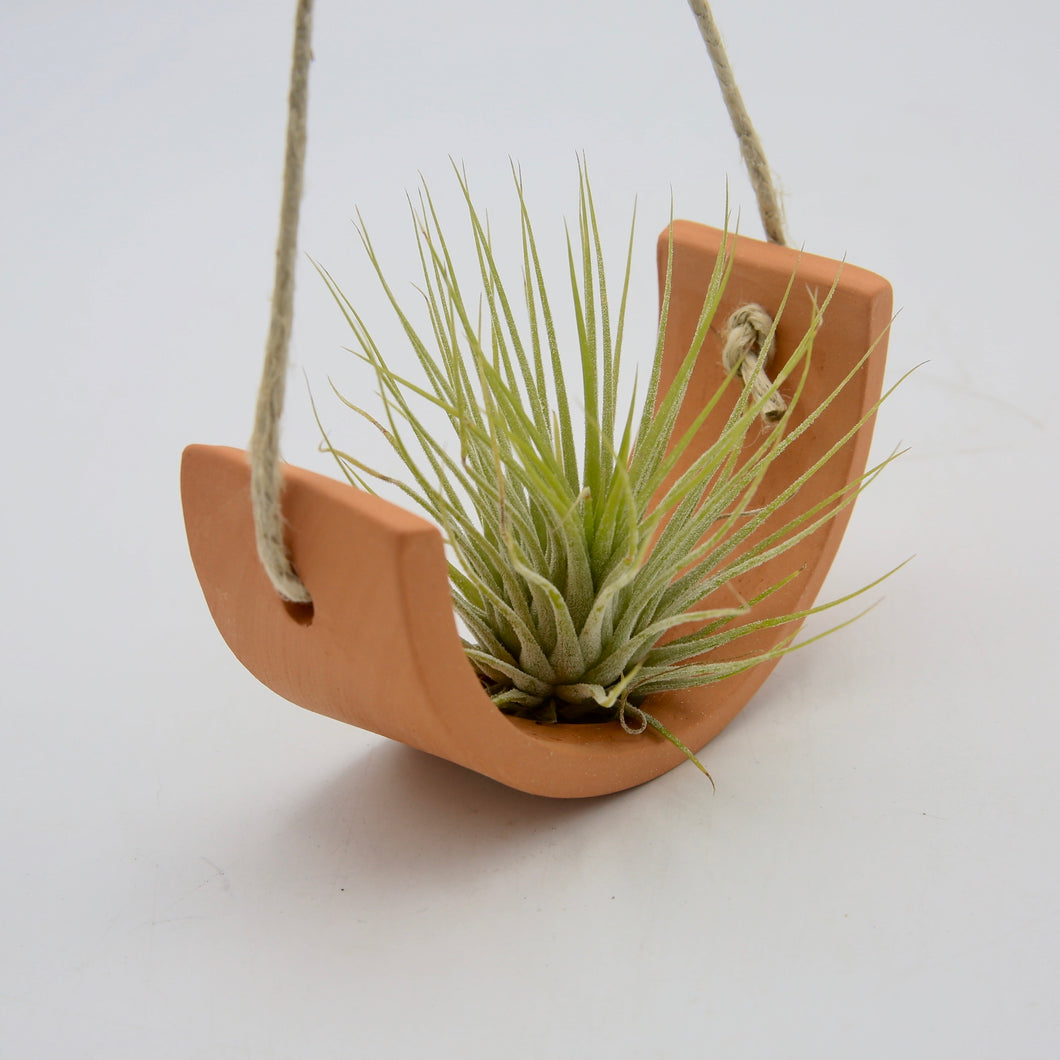 Small Hanging Air Plant Cradle
