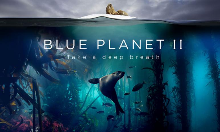 Blue Planet 2 - Scuba Diving and Filming