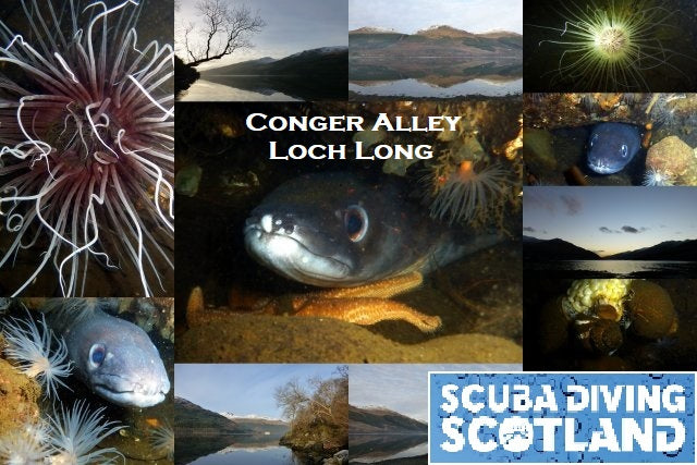 Diving Day Sunday 10th December 2017 - Conger Alley, Loch Long