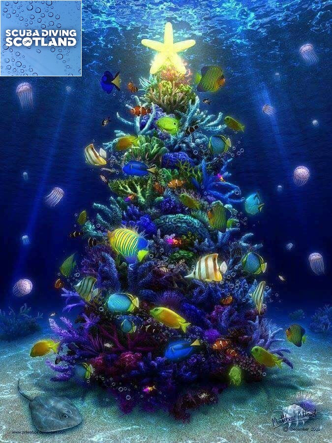 Merry Christmas from SCUBA DIVING SCOTLAND