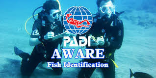PADI AWARE Fish ID Speciality