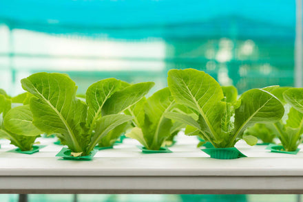 How to start your own hydroponic garden