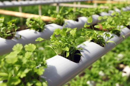 Advantages of Hydroponic farming