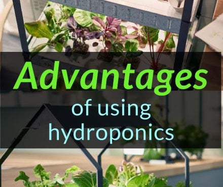 Advantages of Hydroponic Growing