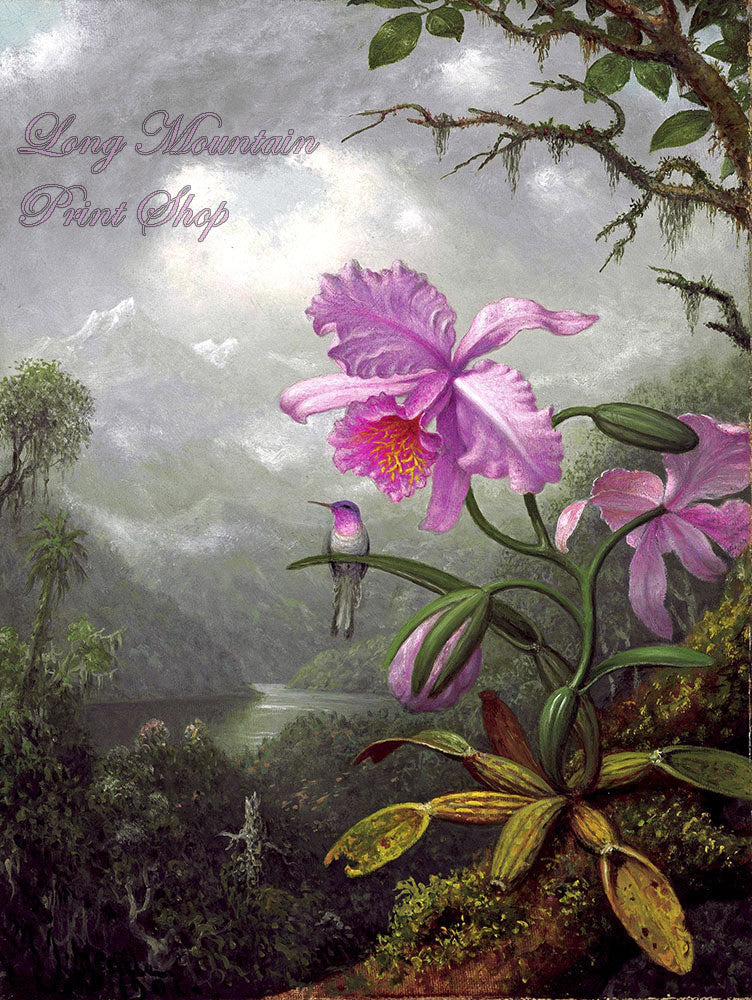 Heade, Martin Johnson - Hummingbird Perched on the Orchid Plant Fine Art Print